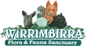 Wirrimbirra Sanctuary - Accommodation Find